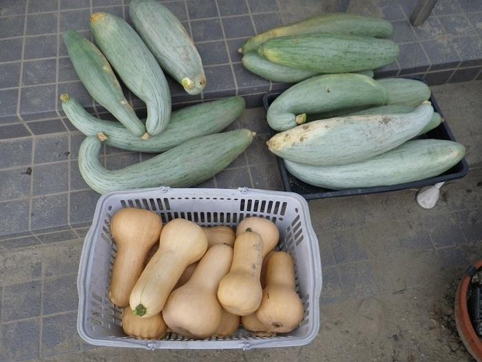 収穫5_16_07_31