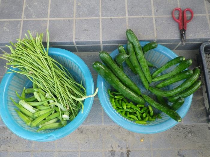 収穫16_08_01