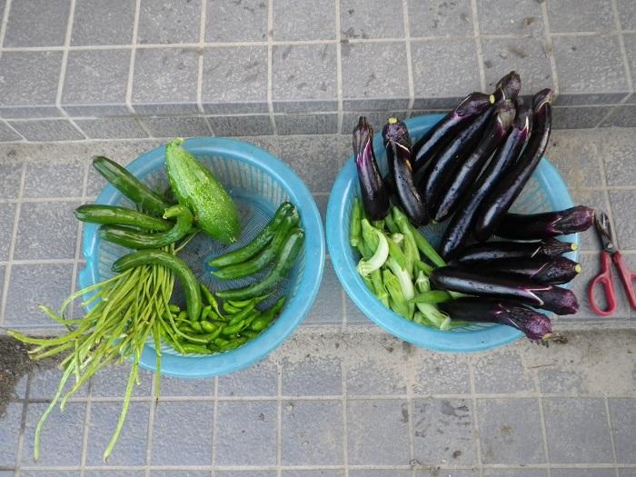 収穫16_08_03