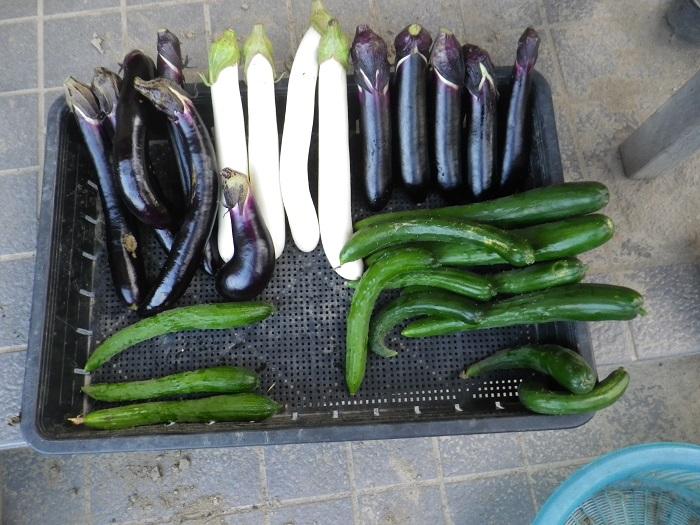 収穫1_16_08_04