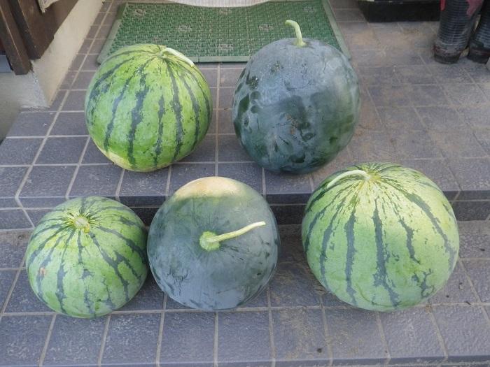 収穫2_16_08_05