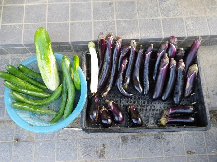収穫1_16_08_07