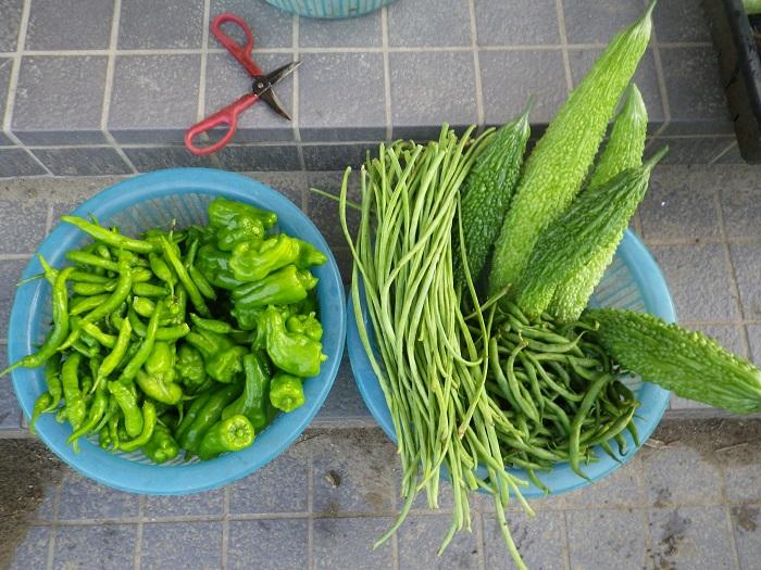 収穫2_16_08_07