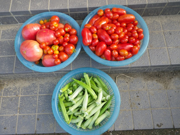 収穫3_16_08_07