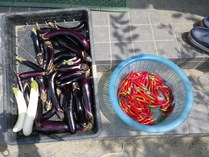 収穫4_16_08_07