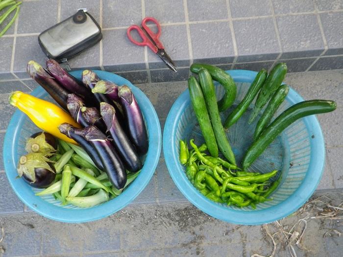 収穫1_16_08_08
