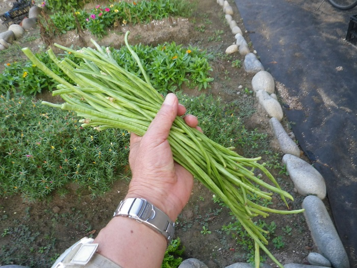 収穫2_16_08_08