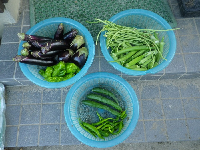 収穫16_08_10