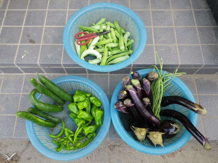 収穫1_16_08_12