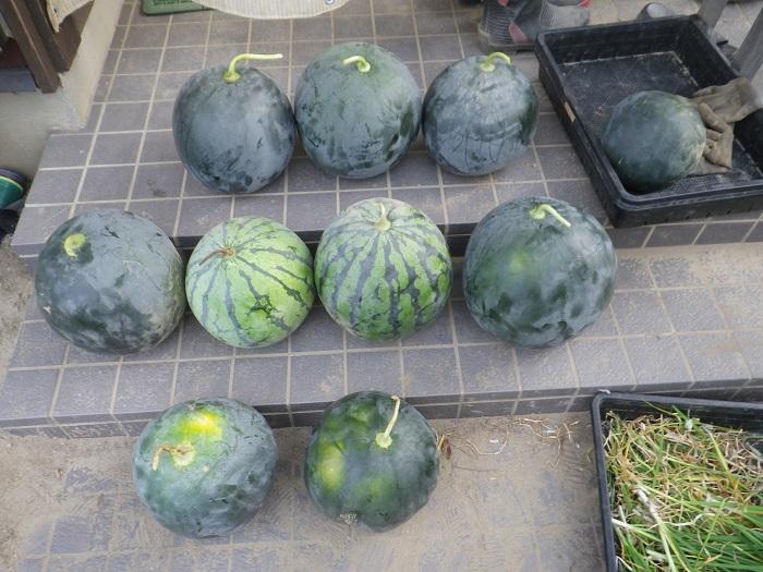 収穫2_16_08_13