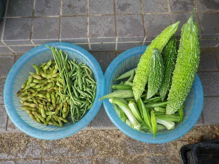 収穫2_16_08_14
