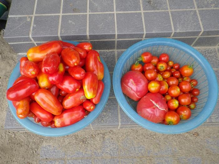収穫3_16_08_14