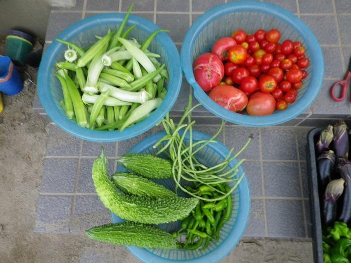 収穫2_16_08_19