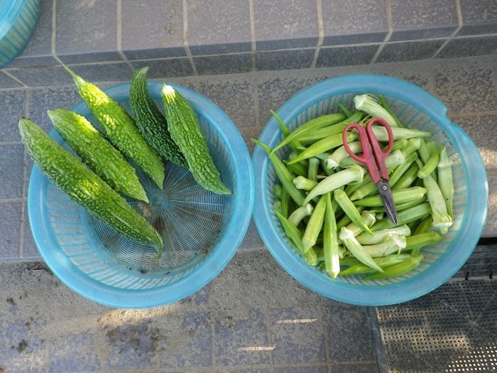 収穫2_16_08_21