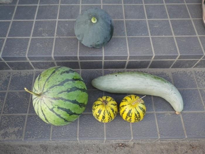 収穫4_16_08_21
