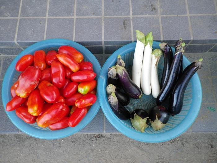 収穫1_16_08_22