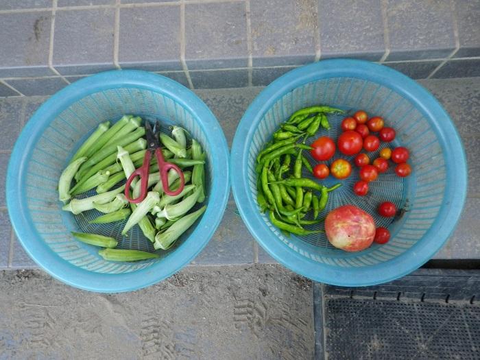 収穫2_16_08_22