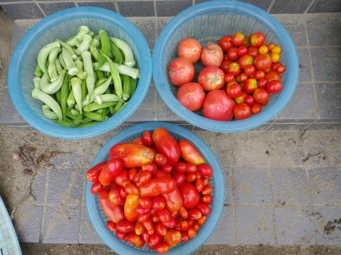 収穫1_16_08_28