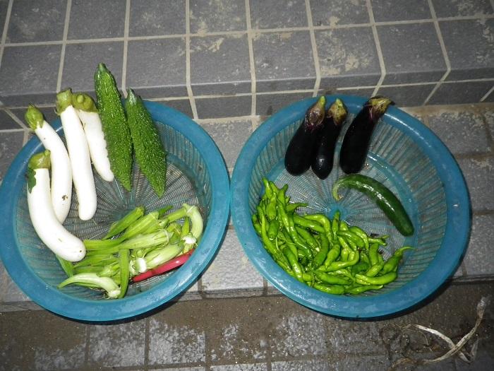 収穫16_08_30