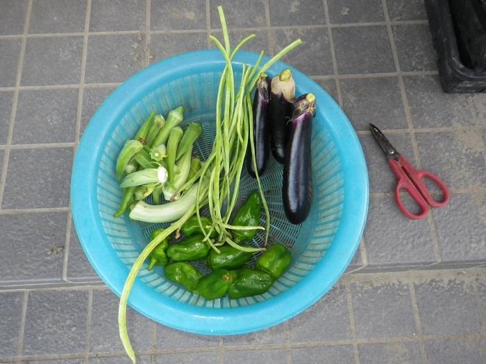 収穫16_08_31