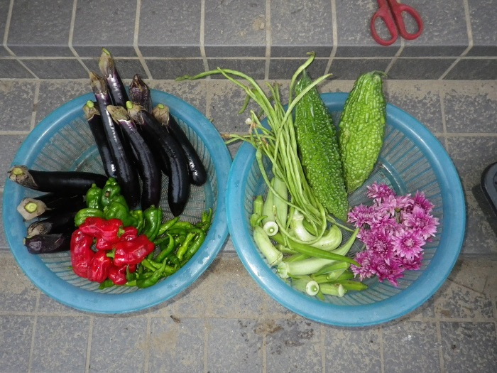 収穫16_09_06