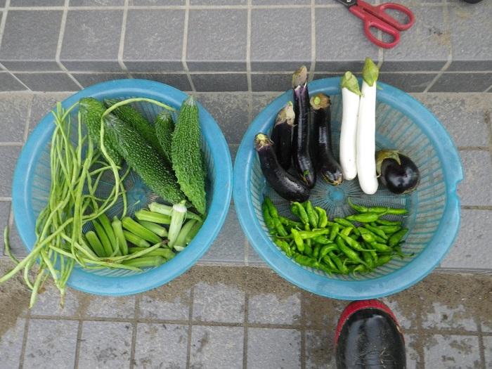 収穫16_09_08