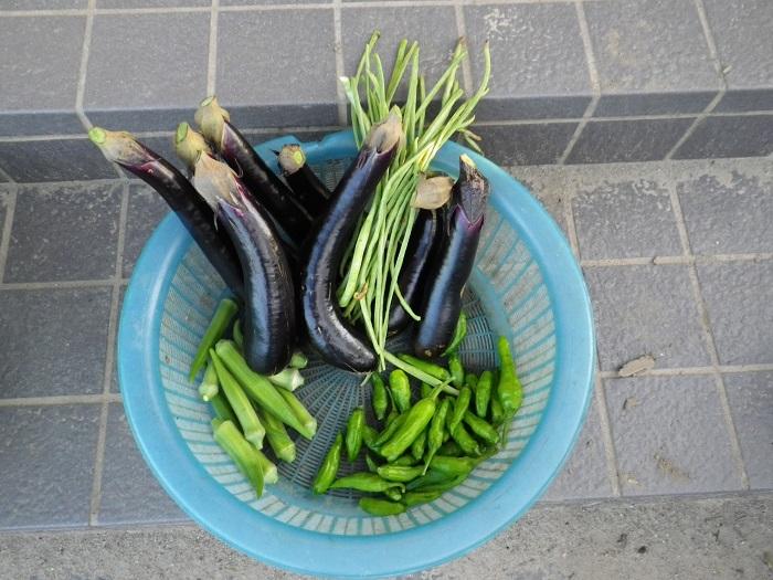 収穫16_09_09