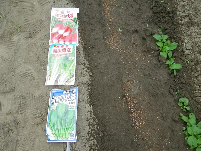 小物野菜3_16_09_11