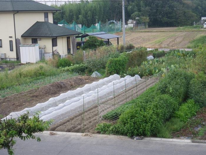 畑の様子2_16_09_12