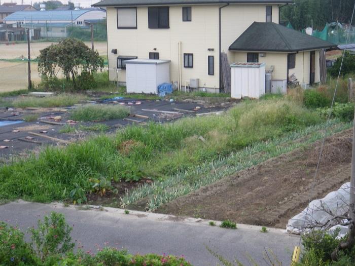畑の様子3_16_09_12