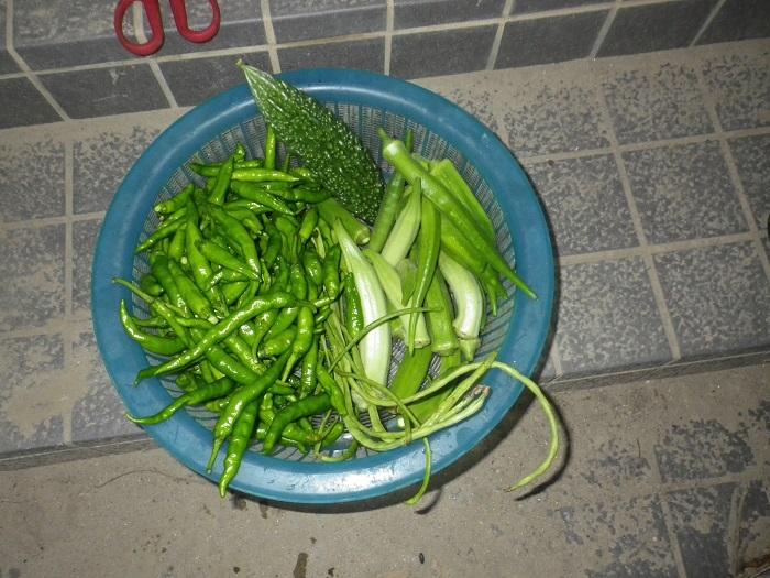収穫2_16_09_16