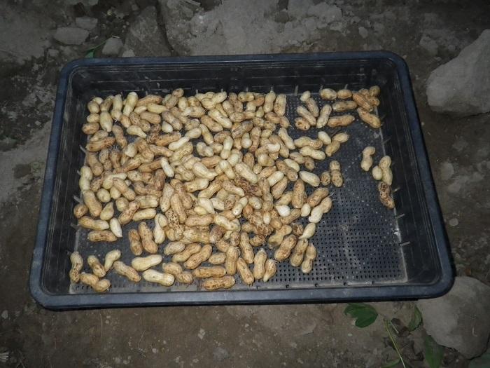 収穫2_16_09_17