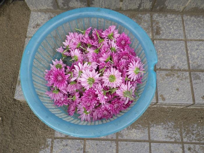 収穫3_16_09_18