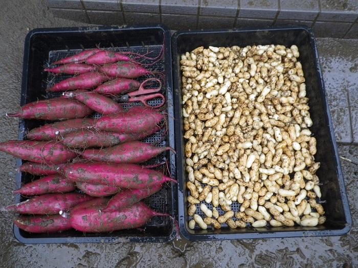 収穫2_16_09_18