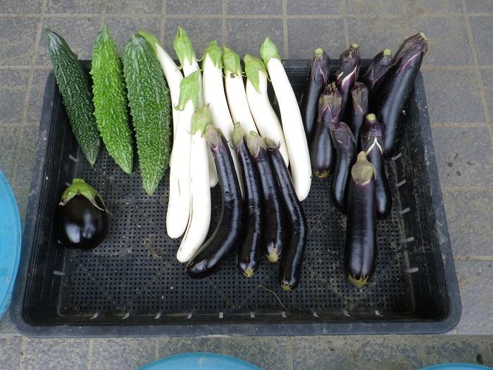 収穫3_16_09_19