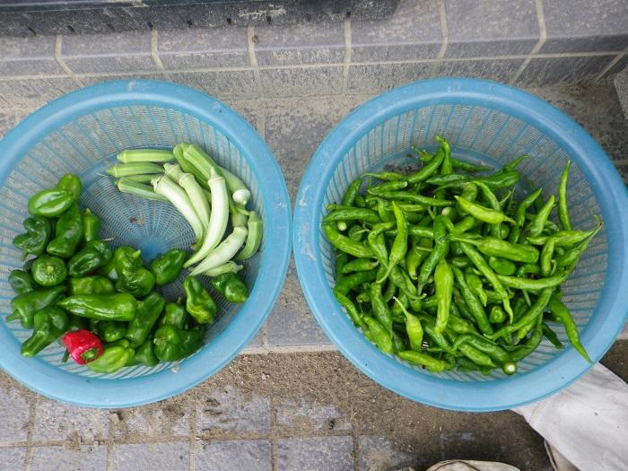 収穫4_16_09_19