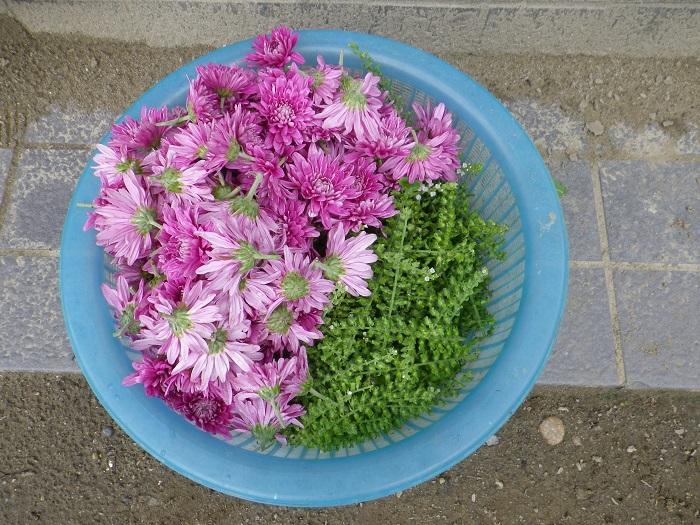 収穫5_16_09_19