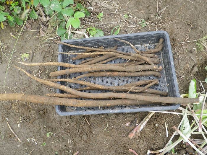 収穫8_16_09_19