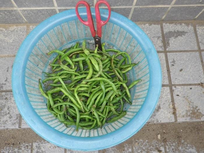 収穫3_16_10_02