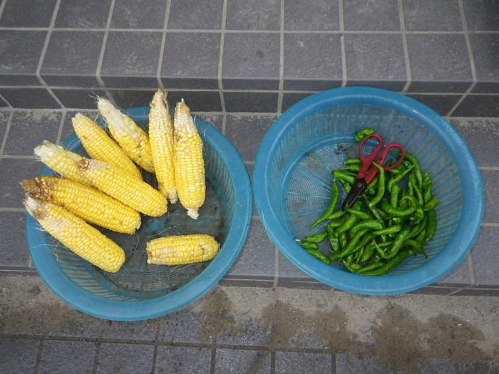 収穫1_16_10_08