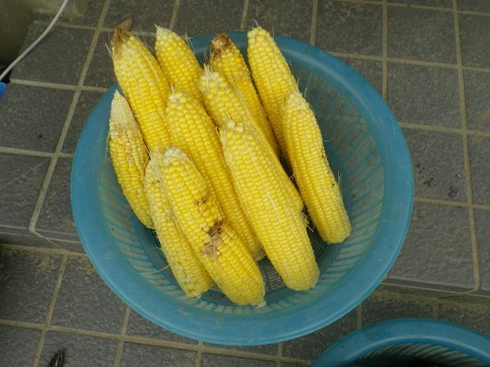 収穫2_16_10_09