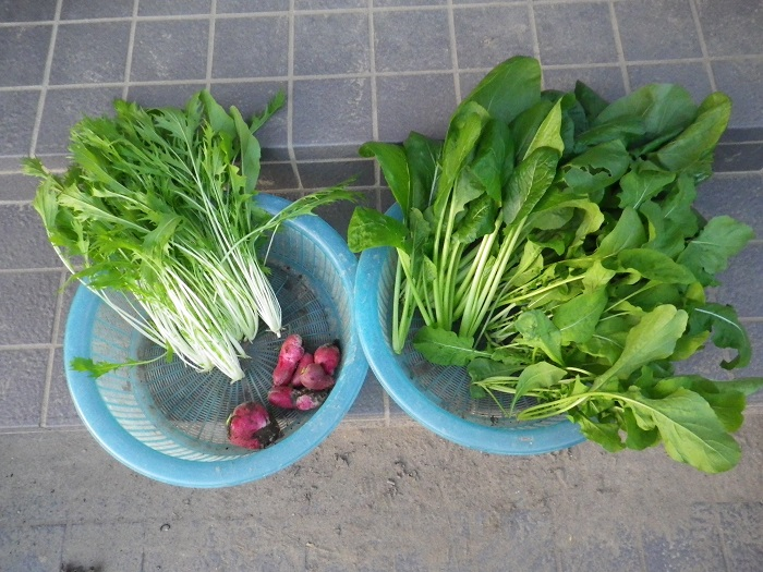 収穫16_10_29