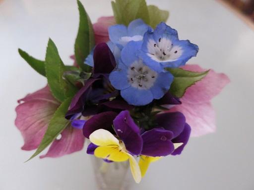 5-5パパの育てた花達