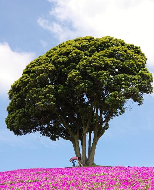 6-17大きな木のしたで①