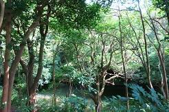 10-3森の中