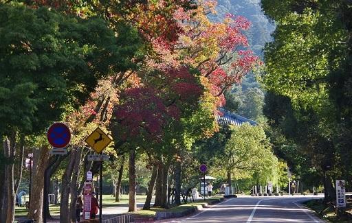 11-9奈良の紅葉