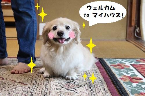 001_201609202227139bc.jpg