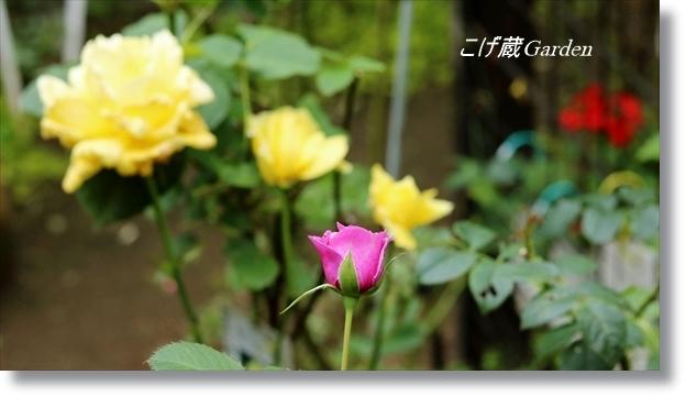 IMG_0080_R.jpg