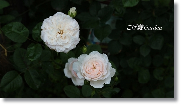IMG_1039_R.jpg
