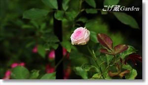 IMG_1340_R_R.jpg